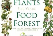 Plants food forest